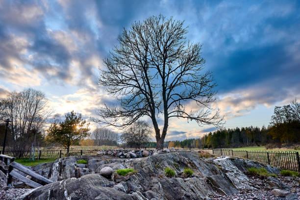Arboleda conmemorativa con una hermosa puesta de sol en Vármdá - foto de stock
