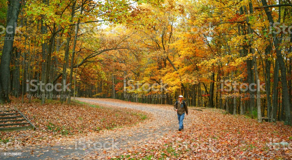 Men are hiking in the forest stock photo
