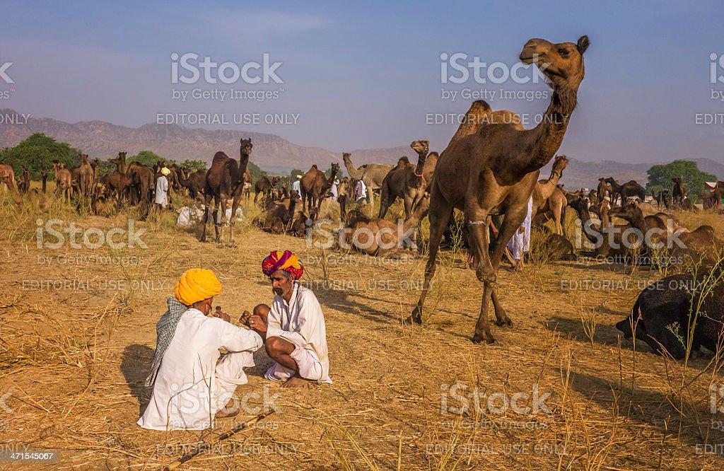 Men discuss sale of camels, Pushkar, Rajasthan, India. royalty-free stock photo