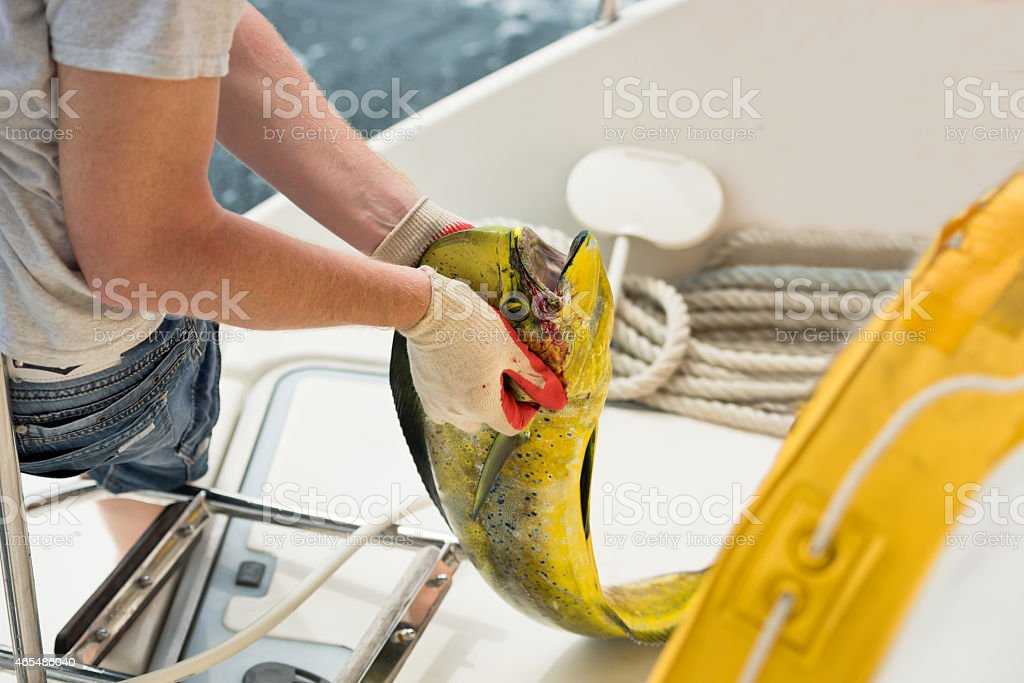 Men holds a fresh catching fish stock photo