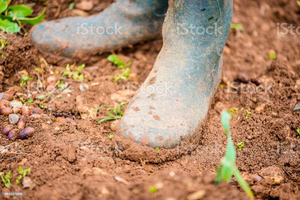 Homens usando botas de borracha - Foto de stock de Adulto royalty-free