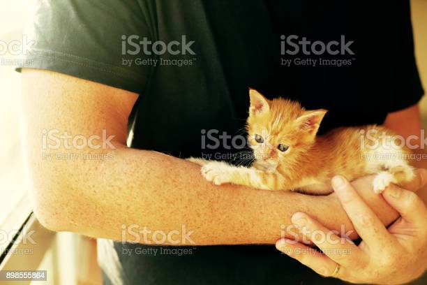 Men is holding little red kitten picture id898555864?b=1&k=6&m=898555864&s=612x612&h=xatu wxk8 n90kcbknxhyysn5tffdnweuda5bw47wpe=