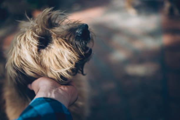 hund streicheln männer - hunde aus dem tierheim stock-fotos und bilder
