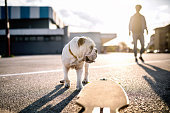 Skater and his dog on parking lot