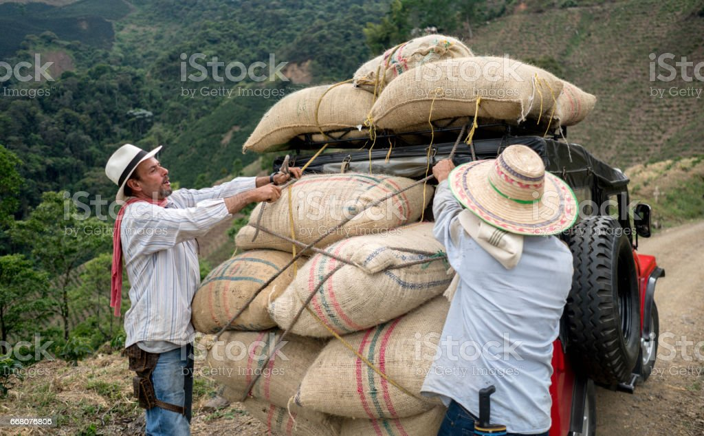 Men transporting sacks of coffee in a car stock photo