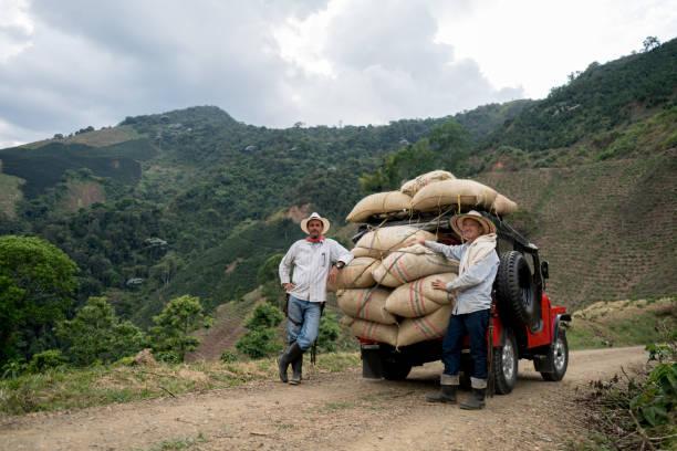 men transporting sacks of coffee in a car - coffee farmer foto e immagini stock