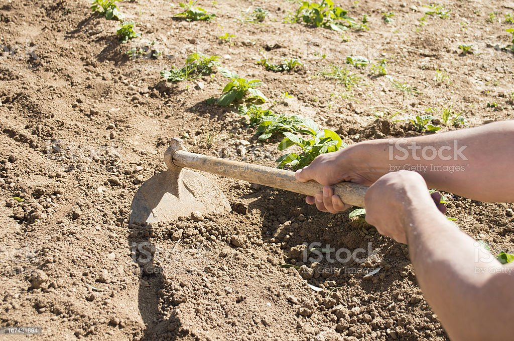 men with a hoe stock photo