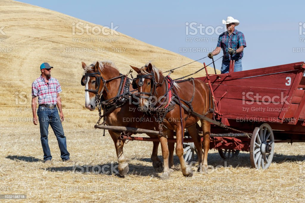 Men With Their Draft Horses Pulling A Wagon Stock Photo Download Image Now Istock