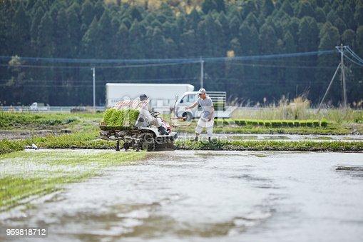 istock Men working in rice planting. 959818712
