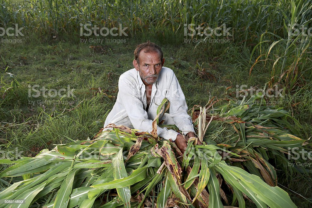 Men Working in the Field royalty-free stock photo