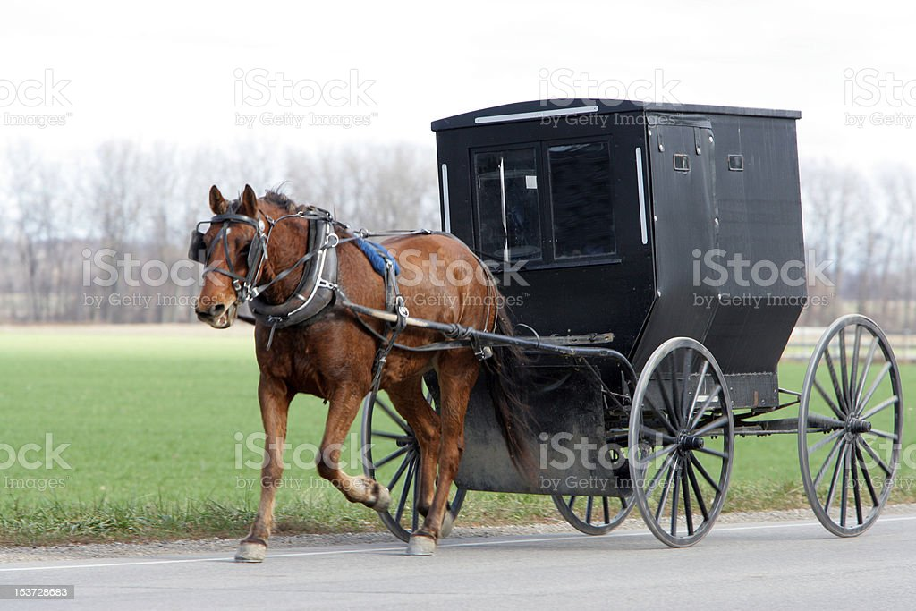Mennonite farmer going to market in buggy and horse stock photo