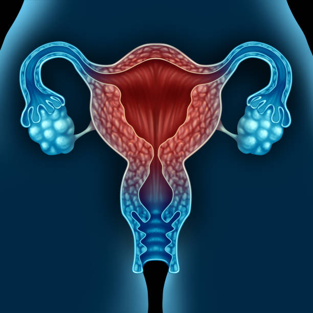 menopause - uterus stock pictures, royalty-free photos & images
