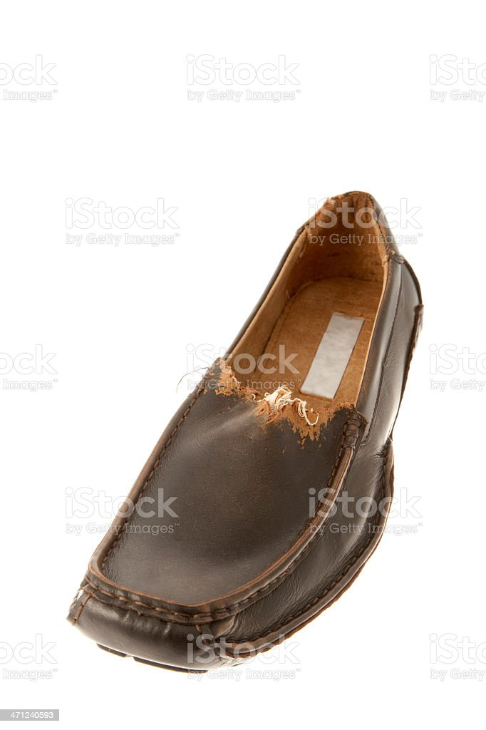 Men's Brown Loafer Shoe Chewed by a Puppy stock photo