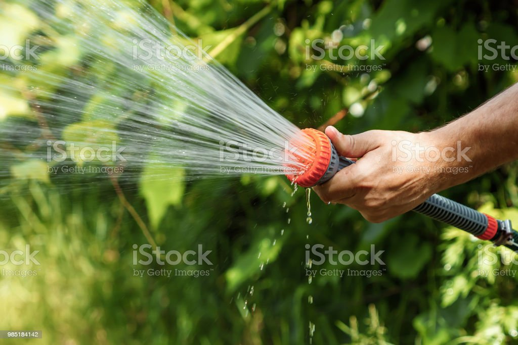 Mens Hand With Garden Hose Watering Plants Gardening Concept