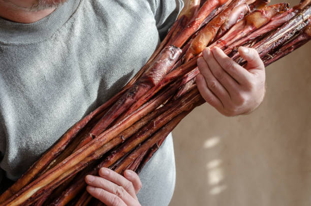 Men's hands hold group of dried Beef pizzle. Men's hands hold group of dried Beef pizzle. Bully Sticks Large Size.  Dental Dog Treats. Pets. animals with big penis stock pictures, royalty-free photos & images