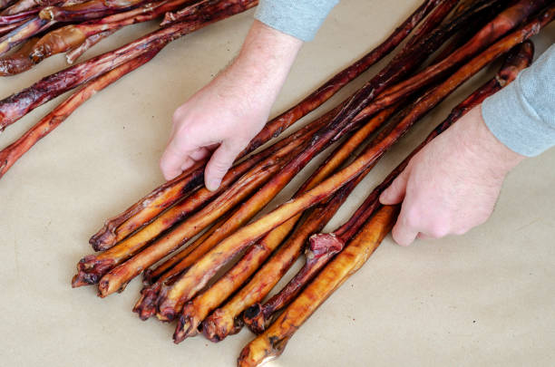 Men's hands spread out group of dried Beef pizzle. Men's hands spread out group of dried Beef pizzle. Bully Sticks Large Size.  Dental Dog Treats. Pets. animals with big penis stock pictures, royalty-free photos & images