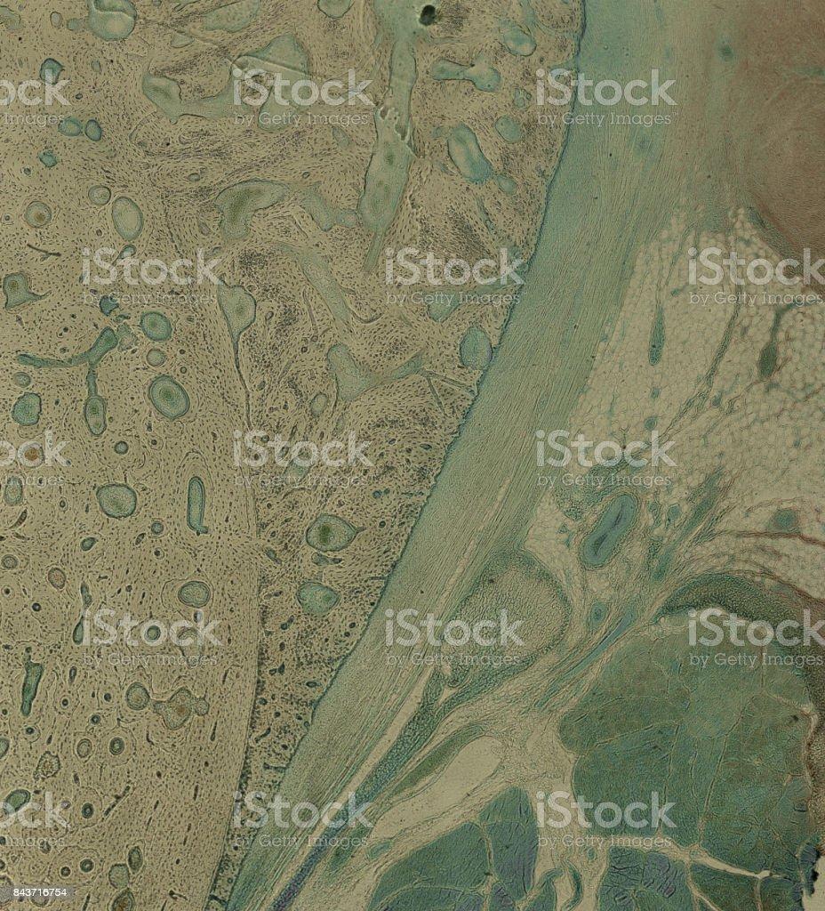 menschliche Zellen unter dem Mikroskop stock photo