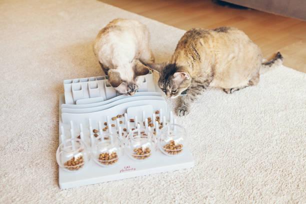 jogo de desafios mentais para gatos, também pode ser usado para alimentação diária com alimentos secos. - comodidades para lazer - fotografias e filmes do acervo