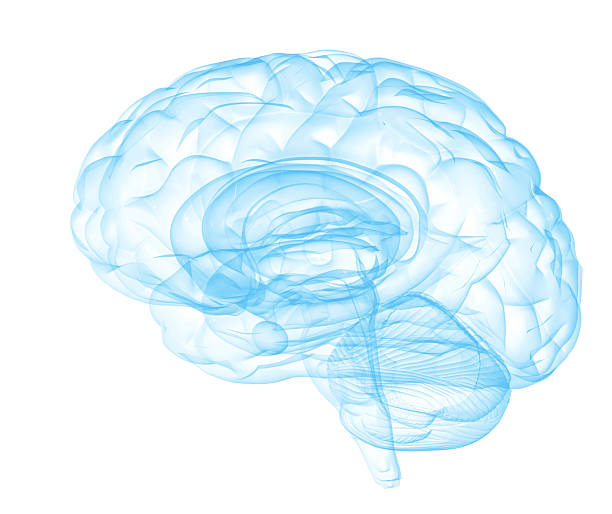 Mental Clarity [b]transparent human brain on white background[/b]  [i]similar[/i] [url=http://www.istockphoto.com/stock-photo-22234937-mental-clarity.php][img]http://i.istockimg.com/file_thumbview_approve.php?size=2&id=22234937[/img][/url]   [i]more brain concepts[/i] [url=http://www.istockphoto.com/stock-photo-22537237-brainwashing.php][img]http://i.istockimg.com/file_thumbview_approve.php?size=1&id=22537237[/img][/url]    [url=http://www.istockphoto.com/stock-photo-22540572-master-mind.php][img]http://i.istockimg.com/file_thumbview_approve.php?size=1&id=22540572[/img][/url]   [url=http://www.istockphoto.com/stock-photo-22540608-precious-mind.php][img]http://i.istockimg.com/file_thumbview_approve.php?size=1&id=22540608[/img][/url]   temporal lobe stock pictures, royalty-free photos & images