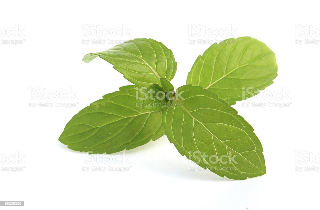 Mentha mint green leaves royalty-free stock photo