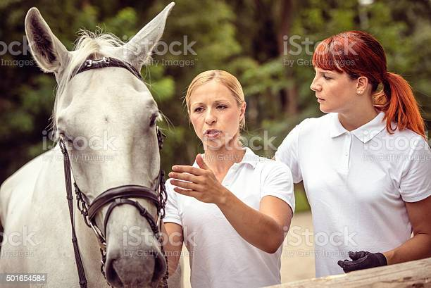 Mentor explaining horse harnesses to her student picture id501654584?b=1&k=6&m=501654584&s=612x612&h=wtipanb8w82f6pugusax 1onydyfcyclnkzcp02pnym=