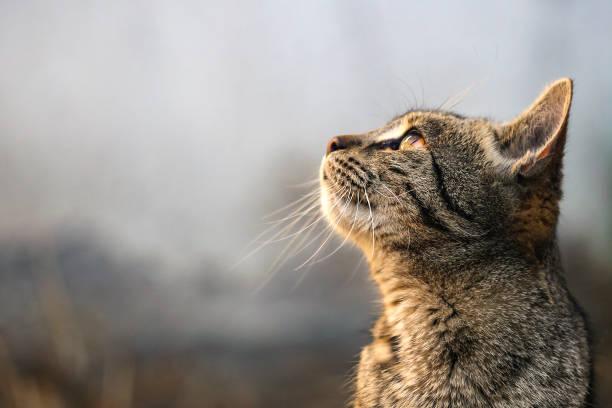 Meow stock photo