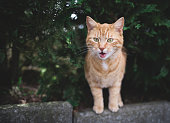 meowing cat on a curb