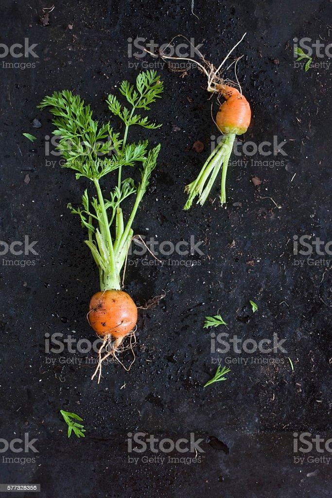 Mercado de Paris - home grown small carrots stock photo