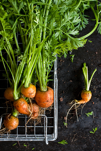 Mercado De Paris Home Grown Small Carrots Stock Photo - Download Image Now