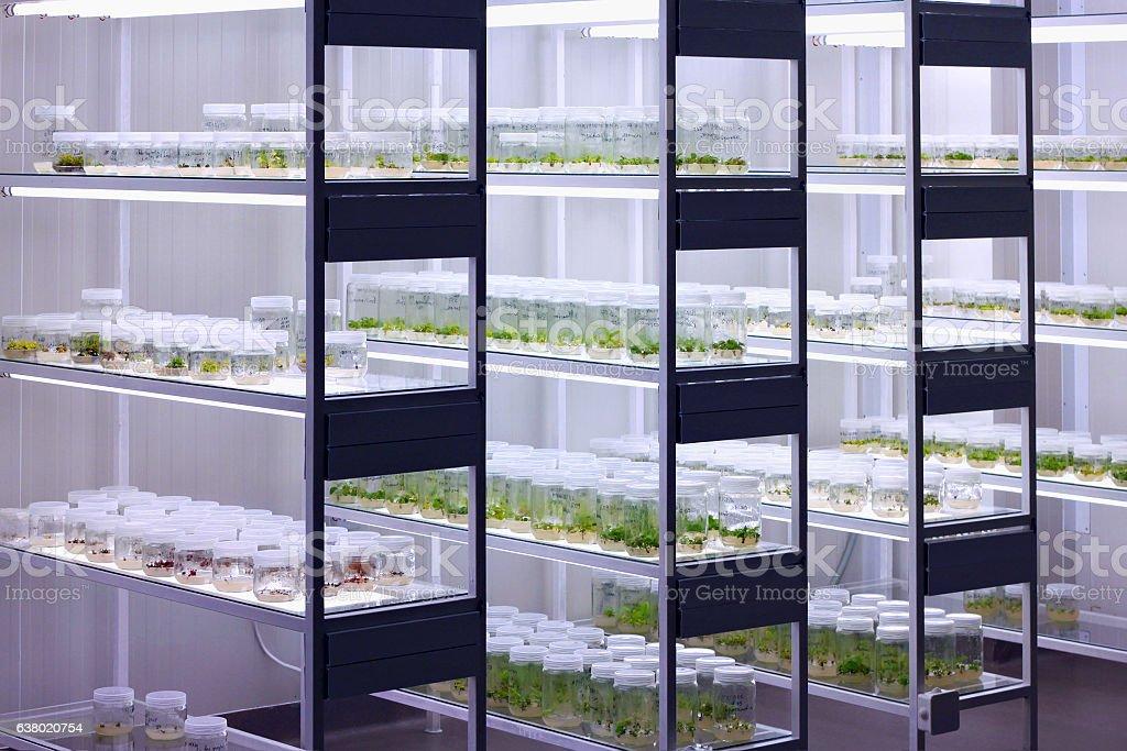 Meristem tissue culture laboratory. stock photo