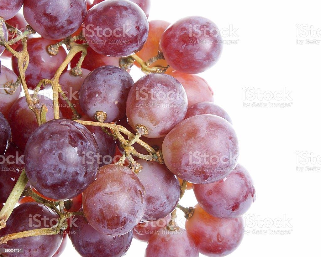 Merlot raisin sur la vigne dans le vignoble gros plan photo libre de droits