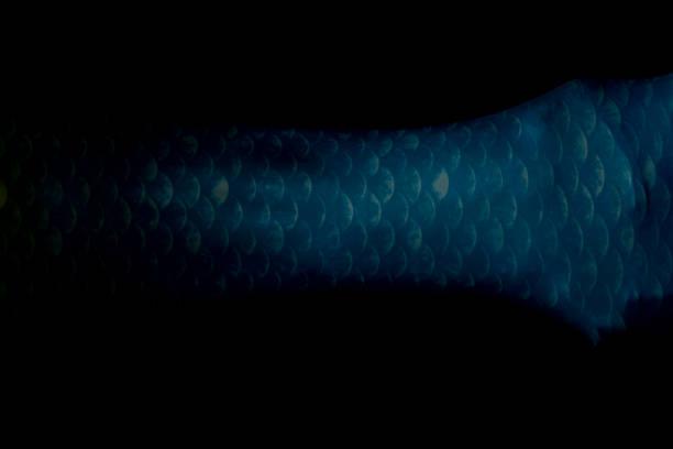 meerjungfrau körper schwanz detail auf schwarz - shell tattoos stock-fotos und bilder