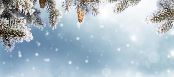 frohe weihnachten und glückliches neues jahr grußkarte. winterlandschaft mit schnee. - schneeflocke sonnenaufgang stock-fotos und bilder