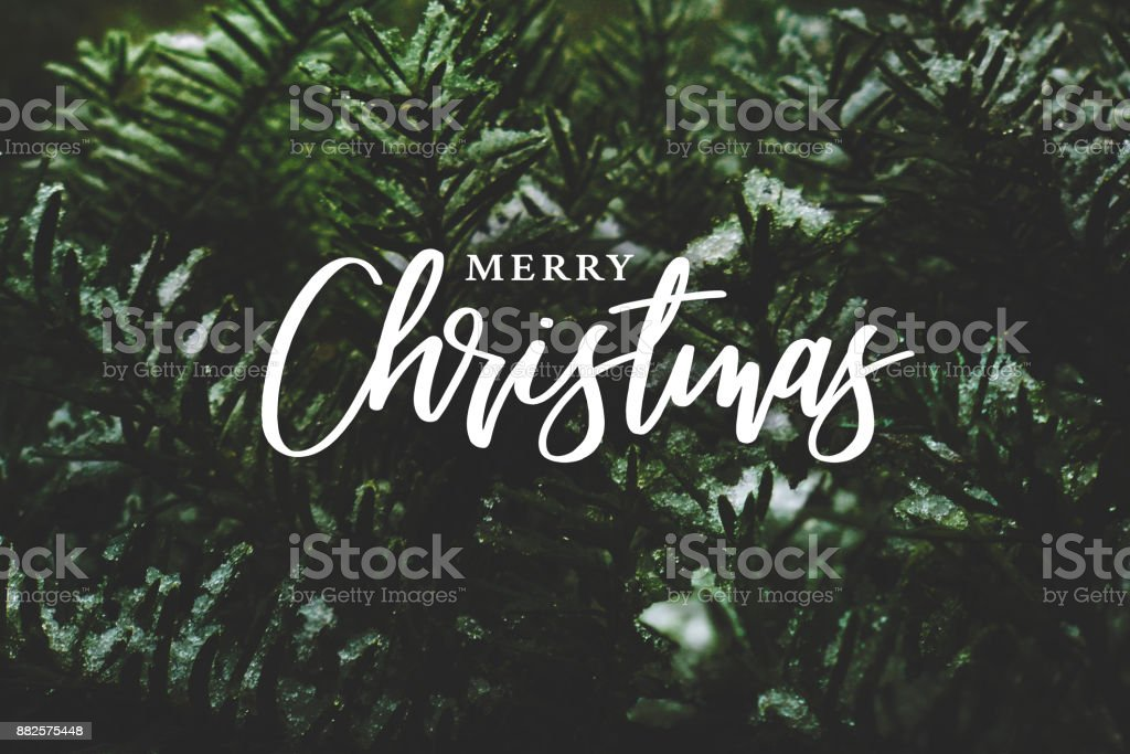 Merry Christmas Calligraphy Over Evergreen Branches Covered in Snow stock photo