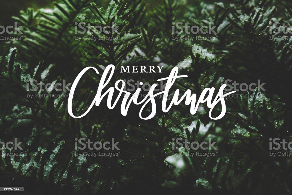 Feliz Navidad caligrafía sobre ramas de hoja perenne cubierta de nieve - foto de stock