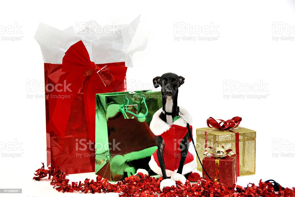 Merry Christmas From Santa's Helper royalty-free stock photo