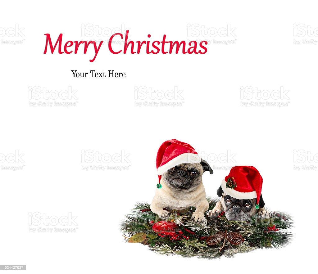 Mops Bilder Weihnachten.Frohe Weihnachten Mops Hundkarte Frohe Feiertage Stockfoto Und Mehr