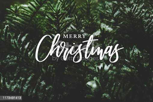 Merry Christmas Script Text Over Evergreen Tree Background Covered in Snow