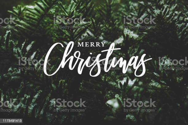Merry christmas script over evergreen tree background picture id1173491413?b=1&k=6&m=1173491413&s=612x612&h=l2fnjbocfh985knijr8qnrk28hbm9jueaht7ffql wu=