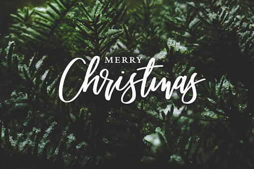 Merry Christmas Script Över Vintergröna Träd Bakgrund-foton och fler bilder på Banderoll