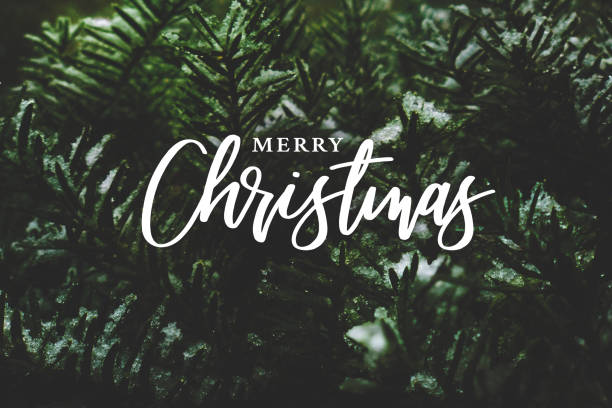 merry christmas script over evergreen tree background (en) - christmas photos et images de collection