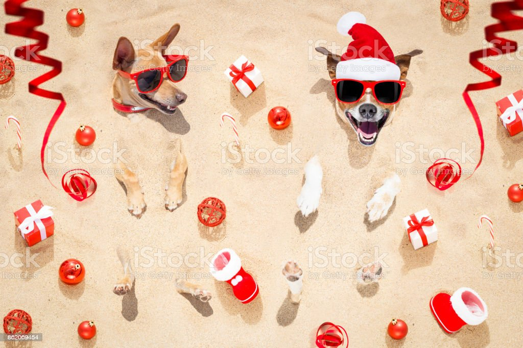 merry chtristmas  dogs at the beach stock photo