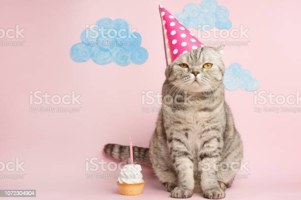 Merry kitty birthday banner anniversary or holiday picture id1072304904?b=1&k=6&m=1072304904&s=612x612&h=drietgiauprcml5grsc2btdu pymocqyztlf p4bjsa=