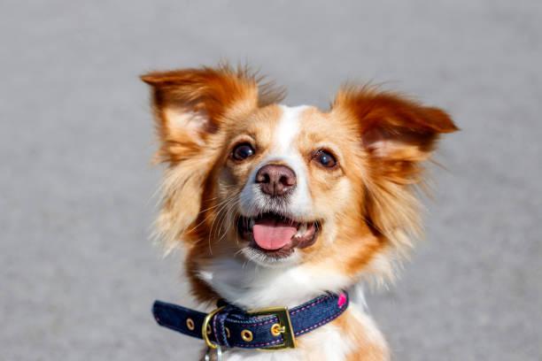 neşeli kırmızı köpek - k logo stok fotoğraflar ve resimler
