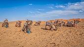 Des dromadaires se reposent dans le  désert de Merzouga au Maroc