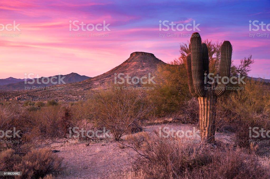 Mesa and Saguaro Cactus at last light stock photo