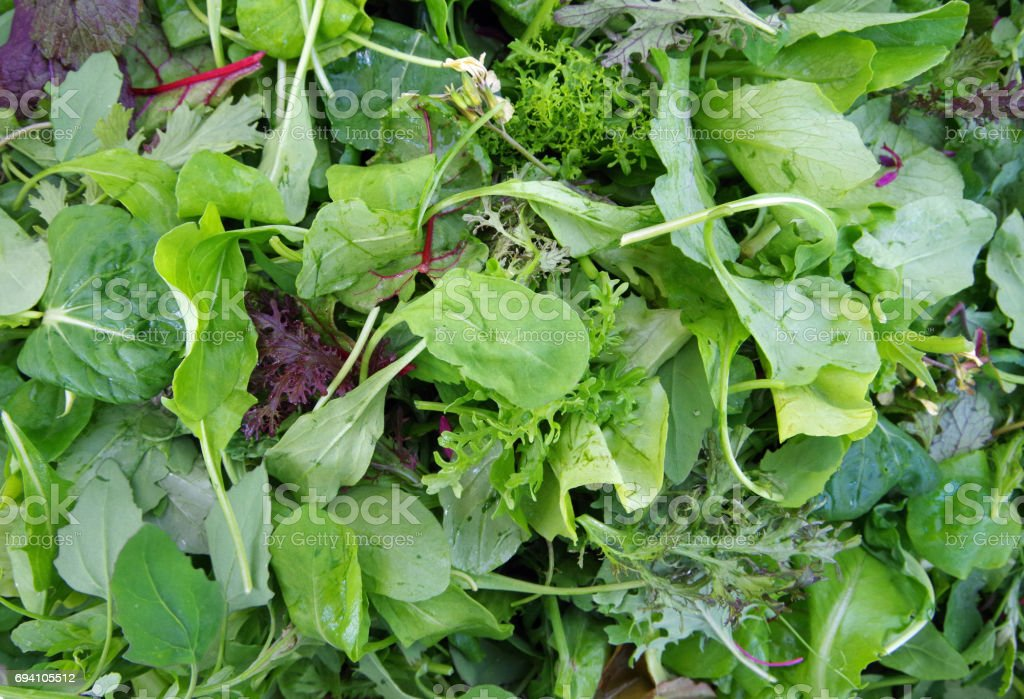 Mesclun salad mixed field greens piled closeup view stock photo