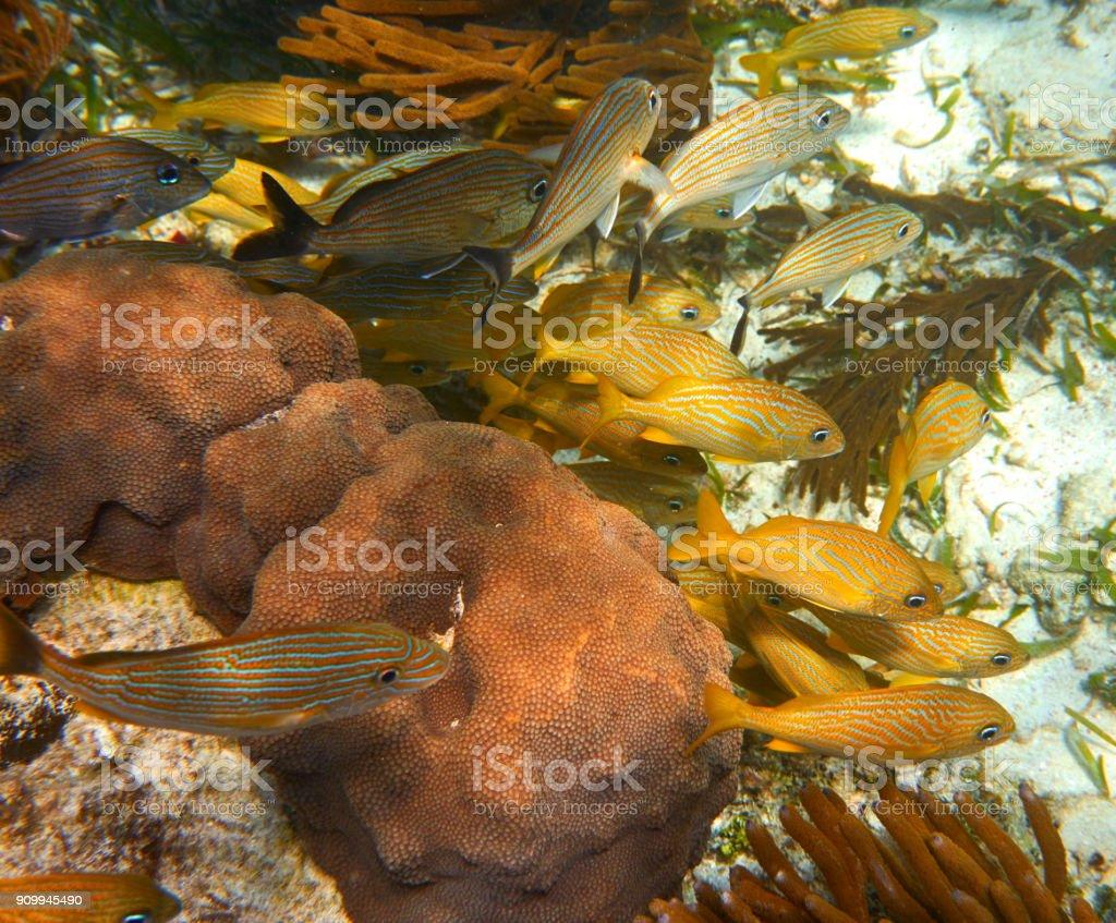 Mesoamerican barrier Great Mayan Reef stock photo