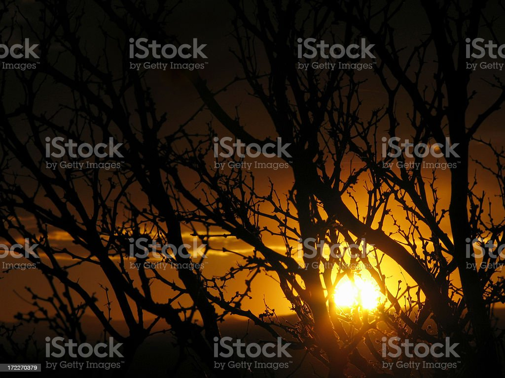 Mesquite at Sunset royalty-free stock photo