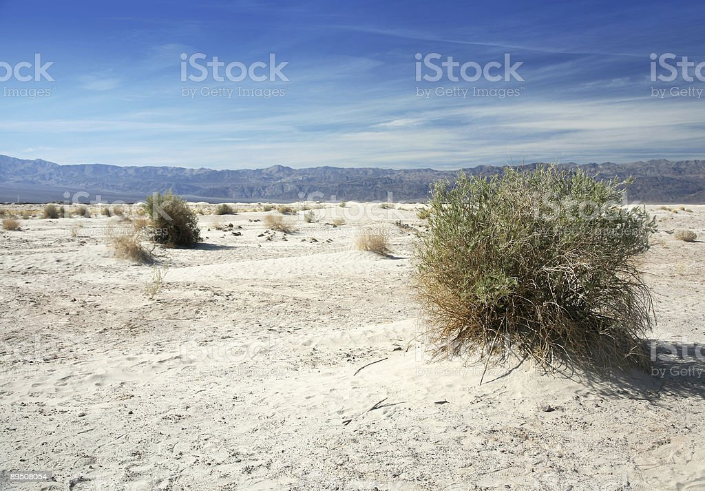 Mesquite Bush In Death valley royalty-free stock photo